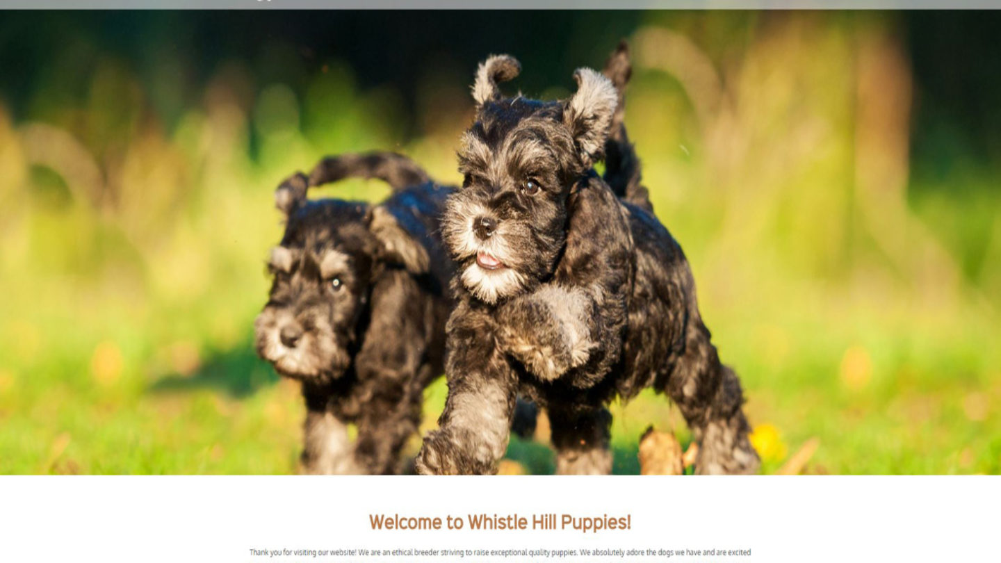 Whistle Hill Puppies