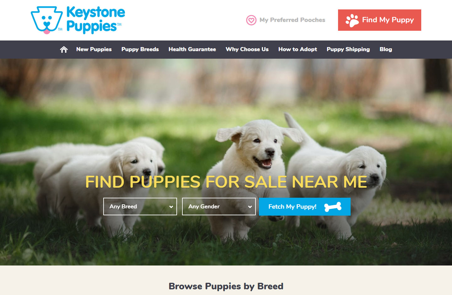 Keystone Puppies