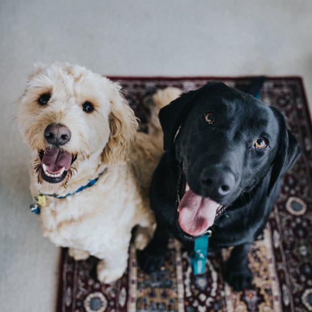 Pets & Veterinarians